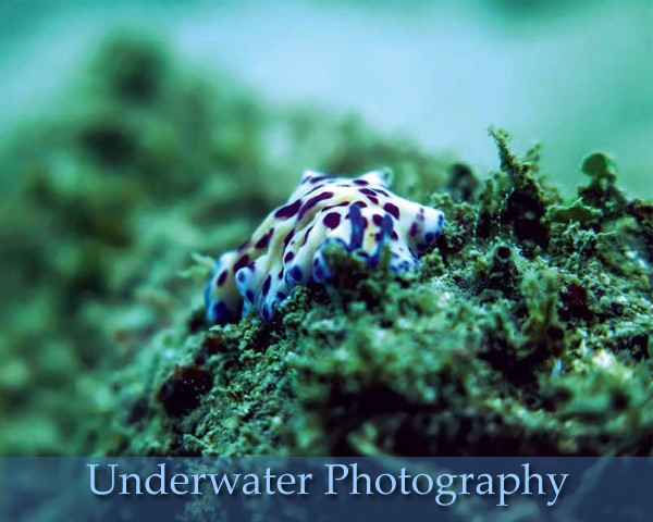 An Introduction To Underwater Photography