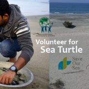 Apply for Bay of Bengal Sea turtle volunteer opportunity 2016-17