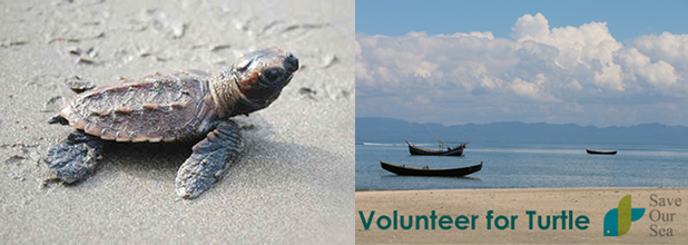 Volunteer for Sea Turtle