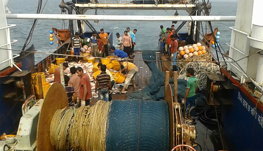 Currently, 246 Trawlers operate in Bangladesh' EEZ in the Bay of Bengal. They operate Bottom-Trawl and Mid-water Trawl nets for fin-fishes and shrimp.