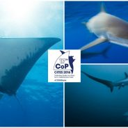 Shark victory at CITES again, credit also goes to Bangladesh